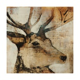 Young Stag Giclee Print by Kari Taylor