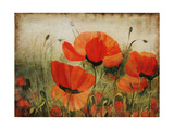 Poppy Daze Giclee Print by Farrell Douglass