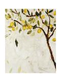 Meyer Lemon Tree Giclee Print by Jodi Maas