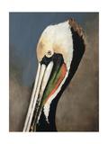 Pelican Bay Reproduction procédé giclée par Sydney Edmunds