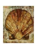 Seashells VIII Giclée-vedos tekijänä Jodi Maas