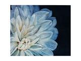White Dahlia Reproduction procédé giclée par Farrell Douglass