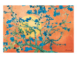 Almond Branches in Sunshine Posters