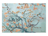 Almond Branches Pastels I Affiches