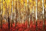 Aspen Grove - Red Kunstdrucke
