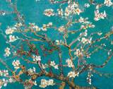 Flor de Amêndoa Pôsters por Vincent van Gogh