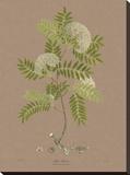 Vintage Botanicals I Stretched Canvas Print by Nathaniel Wallich
