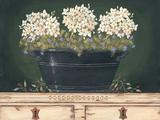 Floral with Hydrangea Plakater af Jo Moulton