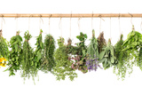 Fresh Herbs Hanging Isolated on White. Basil, Rosemary, Thyme, Mint Fotografisk tryk af  LiliGraphie