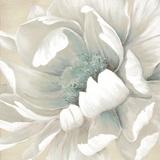 Winter Blooms II Posters af Carol Robinson