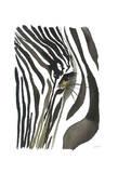 Zebra Eye Poster by Jessica Durrant