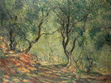 Olive Grove in the Moreno Garden, 1884 Gicléetryck av Claude Monet