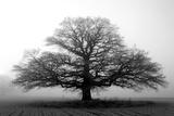 Árbol envuelto en neblina Lámina fotográfica