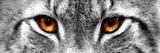 Luchs Fotografie-Druck von  PhotoINC