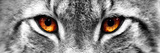 Lynx Photographic Print by  PhotoINC