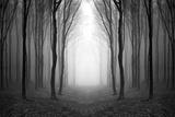 Dark Woods Fotografie-Druck von  PhotoINC