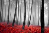 Herbstlicher Wald Fotografie-Druck von  PhotoINC