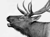 Deer Photographic Print by  PhotoINC