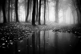 Woods Reproduction photographique par  PhotoINC
