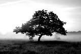 Solemn Tree Fotografisk trykk