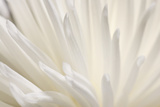 White Flower Photographic Print by  PhotoINC