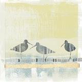 Coastal Birds II Affiches par Ken Hurd