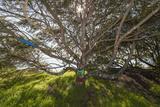 Painted Tree, Albany Bulb (Graffiti, Branches) Muursticker van Henri Silberman