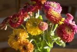 Zinnias, Close-Up (Still Life with Flowers) Muursticker van Henri Silberman