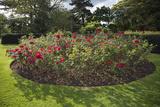 Rose Bed Kew Gaardens (English Garden Scene) Muursticker van Henri Silberman