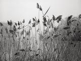 Prospect Park Lake With Grasses - Botanical Landscape Brooklyn Kunst op metaal van Henri Silberman