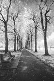 Brooklyn Botanic Gardens - Infrared Garden Walkway Wall Decal by Henri Silberman