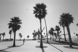Venice Beach Palm Trees - Los Angeles Beaches Veggoverføringsbilde av Henri Silberman