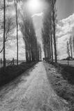 Normandy, France Trees - French Countryside Landscape Veggoverføringsbilde av Henri Silberman