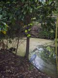 Egret by Pond, Duke Gardens, Durham, NC (Water Bird, Botanical Gardens, South) Autocollant mural par Henri Silberman