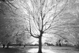 Prospect Park Infrared Tree - Brooklyn Park in Fall Muursticker van Henri Silberman