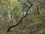 Moss on Tree, Northern California Woods (Native Woodland) Muursticker van Henri Silberman