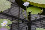 Water Lily, Close-Up (Botanical Green House, Kew Gardens) Muursticker van Henri Silberman