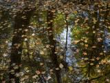 Leaves and Tree Reflections in a Pond Muursticker van Henri Silberman