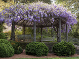 Wisteria Arbor, Duke Gardens, Durham, NC (Purple Spring Flowers) Autocollant mural par Henri Silberman