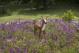 Fawn Garden Statue (Purple Flowers, Durham, NC) Wall Decal by Henri Silberman
