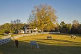 Four Horses Grazing in Front of White Picket Fence Seinätarra tekijänä Henri Silberman