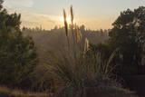 Sun Set Through Pampas Grass Muursticker van Henri Silberman