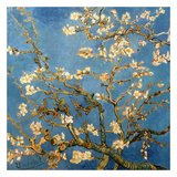 Branches fleuries d'amandier (Détail) Posters by Vincent van Gogh