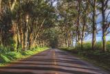 Tree Tunnel to Old Koloa Town, Kauai Hawaii Fotografie-Druck von Vincent James
