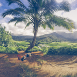 Hanalei Chicken Landscape, Kauai Hawaii Fotografie-Druck von Vincent James