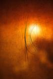 Kiss of Light Reproduction photographique par Philippe Sainte-Laudy