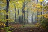 Chemin d'automne Reproduction photographique par Philippe Manguin
