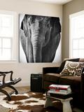 Elephant I Plakater av Debra Van Swearingen