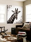 Giraffe I Print by Debra Van Swearingen