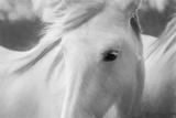 Sweet Horse Stampa fotografica di Marco Carmassi